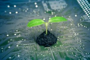 Ein Baum wächst auf einer Platine, symbolisch für Green IT